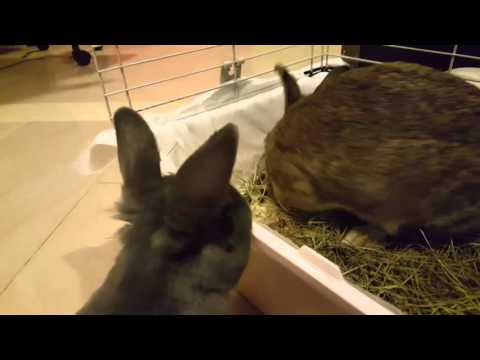 Angry Rabbit makes sounds - YouTube