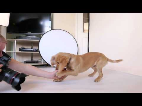 Amy Law Photography Dog Photographer Welcome Video