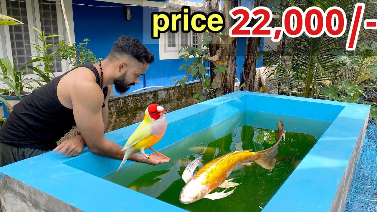 എന്തിനാ…പുതിയ കിളികളെ മേടിച്ചെ !! | Bought New Pet Birds | 22,000/- Rs