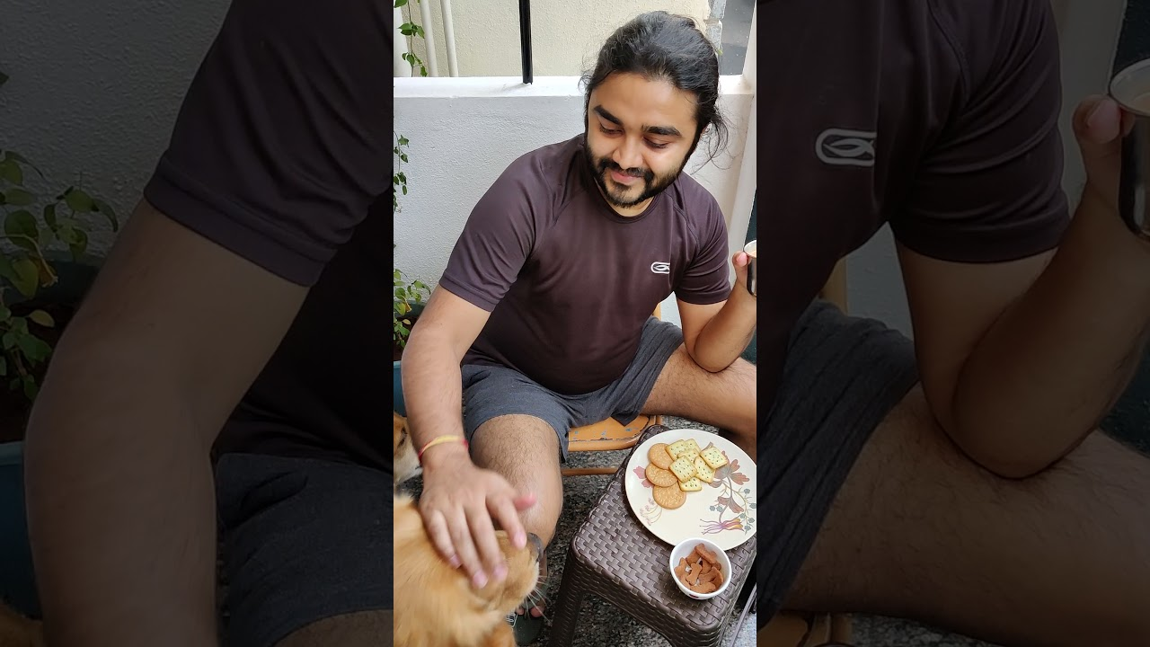 FC_Goldens | Chai time with Hooman | Golden Retrievers