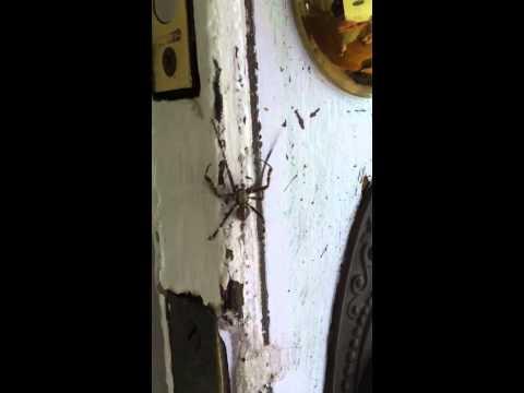 Good Luck Spider @ Spirit House