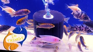 New Fish Keepers Need To Watch This! 10 Things You Should Know About Aquarium Filters