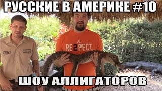 русские в америке 10 шоу аллигаторов
