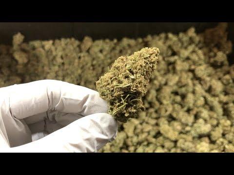 What is CBD Hemp Flower?