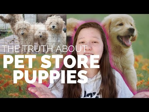Please don't get your puppy from a pet store...