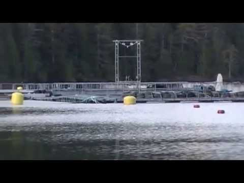 Kyuquot Multi Trophic Aquaculture Morning Site Overview