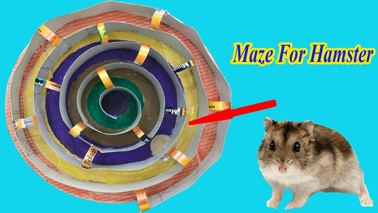 Spiral Maze Cirle For Hamster -  Pets House