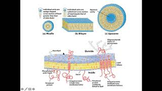 Berikut ini penyakit-penyakit yang terjadi pada ginjal dadi sudut pandang urinalisis di laboratorium.