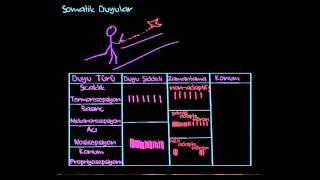 Somatik Duyular (Somatosensasyon ) (Sinir Sistemi Fizyolojisi) (Psikoloji / Çevreyi Algılama)