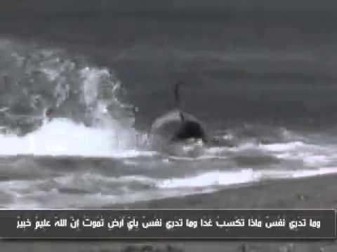 Orca Frisst Hai