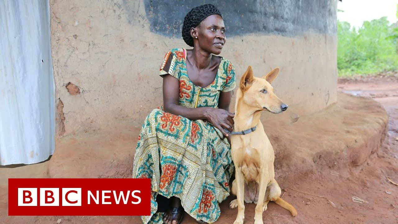 BBC News:Ugandan war survivors partnered with therapy dogs - BBC News