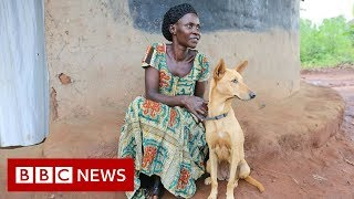 Ugandan war survivors partnered with therapy dogs - BBC News