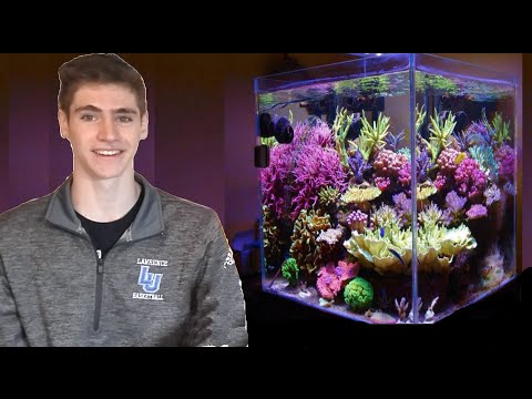 How To Set Up A Nano Reef In 5 Minutes!