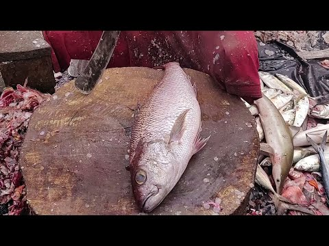 BIG Red Snapper Fish Cutting & Chopping In Asian Fish Market