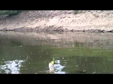 Msgdan1 passaic river pike strike youtube for Passaic river fishing