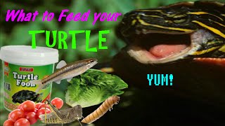 What to Feed your Turtle