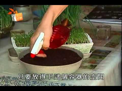 在家種菜蔥 豌豆苗-公共電視文人政事專訪 董淑芬