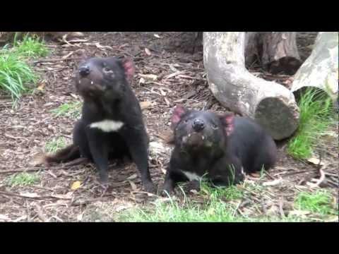 3 weeks in Australia 2011 (part 4) - Tasmania