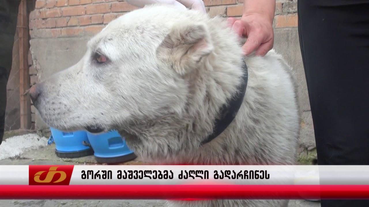 გორში მაშველებმა ძაღლი გადაარჩინეს