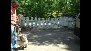 Working Dogs Trained In Advanced Obedience. Master Christian Dog Training Atlanta