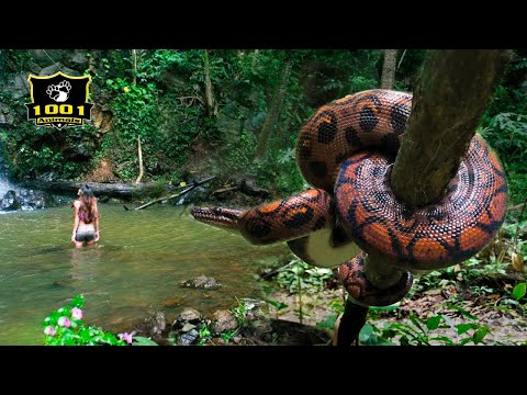 🔥Top 12 DEADLIEST Animals In The Amazon | 1001 Animals