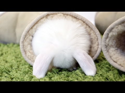 Baby bunnies doing the cutest things, EVER!