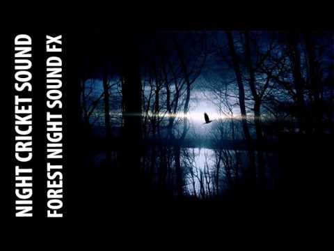 Night Crickets In Woods Sound Effect | Crickets In Forest MP3 Sound FX ♪