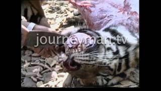 Tiger Kill - Burma