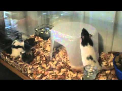 Feeder Mice For Sale