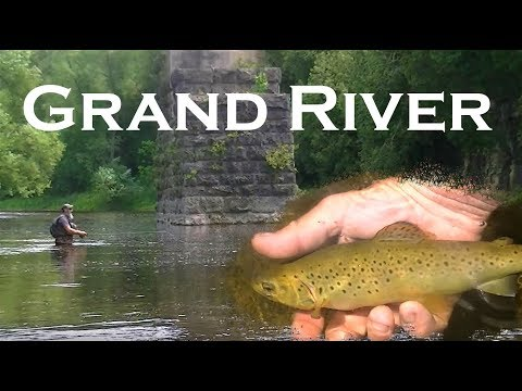 Fly Fishing Browns On The Grand River