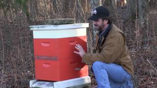 Quick Checkup on the Bees After Winter