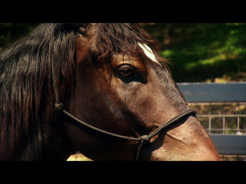 America's Wild Mustang-Untamed Legacy PBS Documentary