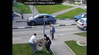 Жители Обнинска ищут отравительницу собак