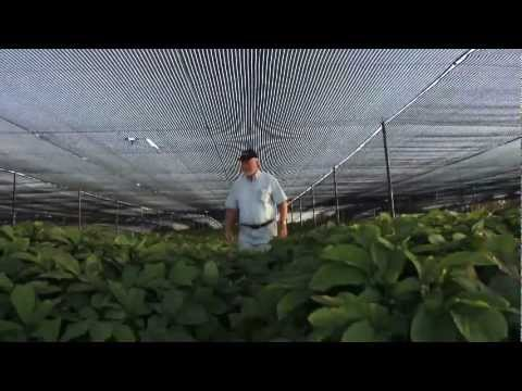 Rainey Ginseng Farms - The Farmer