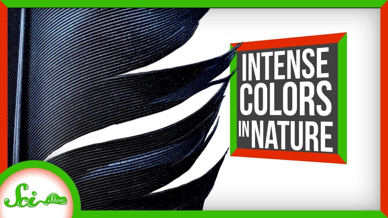 SciShow:3 of the World's Most Intensely Colored Living Things