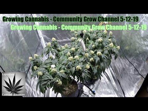 Growing Cannabis - Community Grow Channel 5-12-19