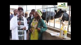 Utugi TV - Dairy Farming (Best Practises About Dairy Farming)
