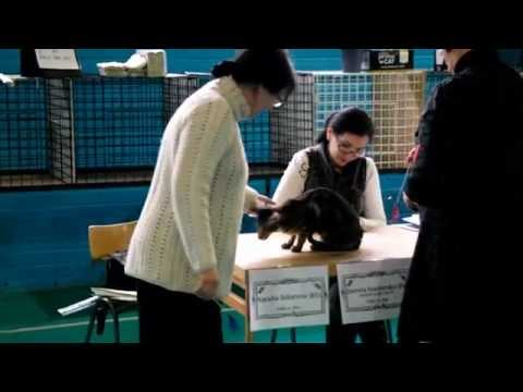 URK Cat Show! | adventureratheart
