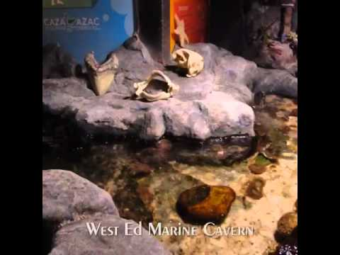 West Edmonton Mall Marine Life Cavern