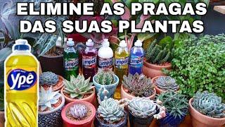 Detergente Neutro nas Plantas do Jardim e Suculentas – Receita Contra Cochonilhas