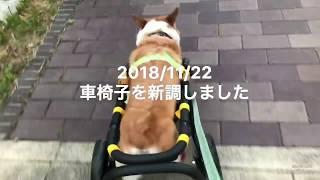 今まで使っていた四輪の車椅子から二輪の車椅子に新調しました。まだ前...