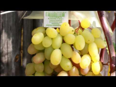 Лучшие сорта винограда на участке 2018 г .