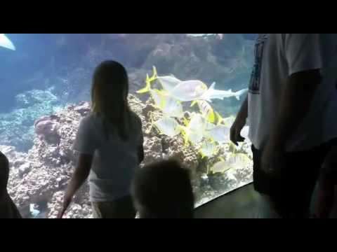Henry Doorley Zoo Omaha Aquarium