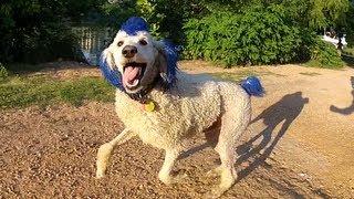 Keep Poodle Weird!