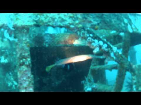 Filipíny 2012 - potápění