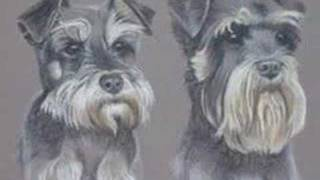 This Video Is Unavailable.     Miniature Schnauzers