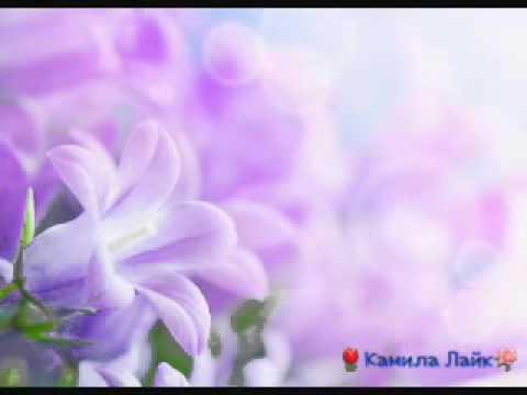 Красивые фото цветов//Beautiful pictures of flowers