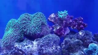 VIPARSPECTRA Full Spectrum LED Aquarium Light Review