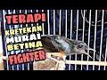 Ketrekan Murai Betina Fighter Murai Macet Langsung Ikut Bongkar  Mp3 - Mp4 Download