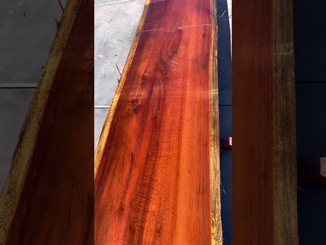 Old Growth Redwood Slab #2